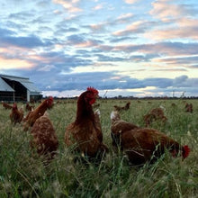 Load image into Gallery viewer, Runnymede Farm - Pasture Raised Eggs (1 dozen)