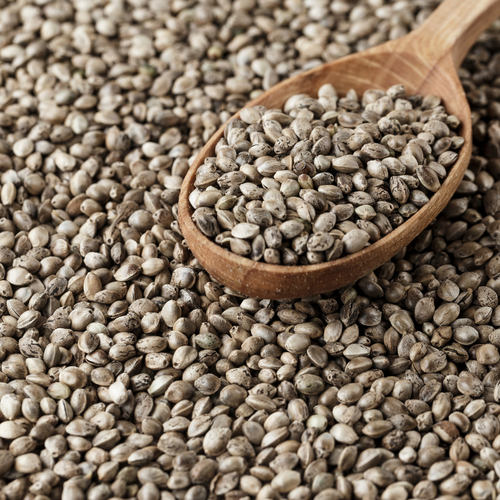 Hemp Seeds - UNDER DEVELOPMENT