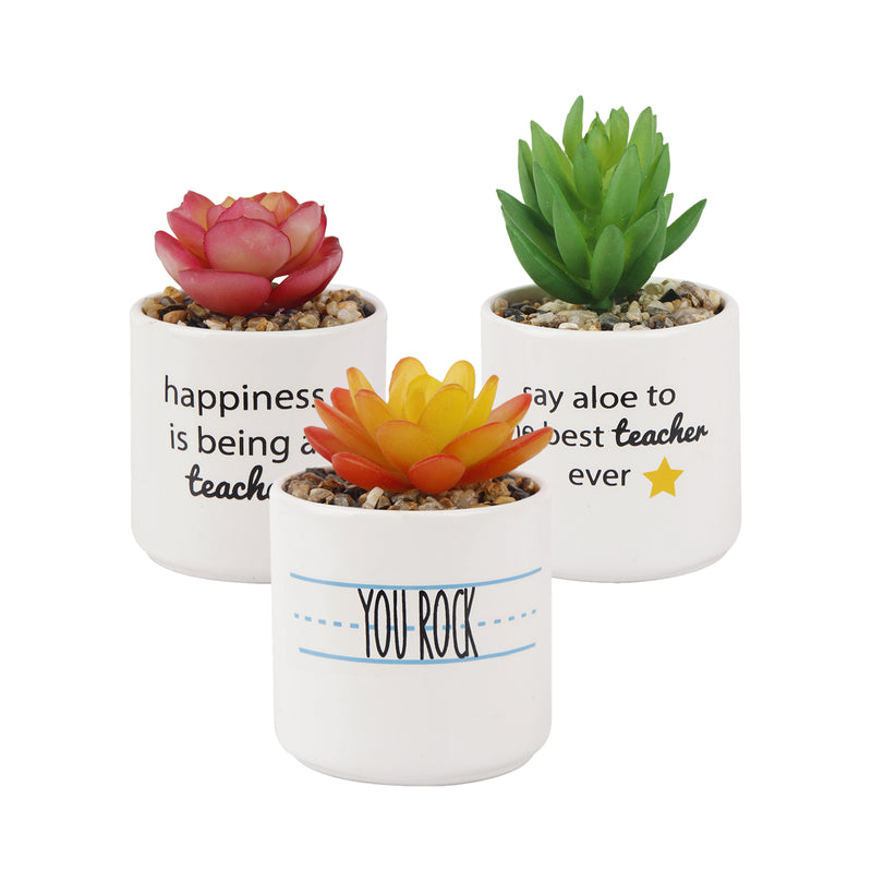 Artificial Faux Succulents Plants with White Slogan Ceramic Set of 3