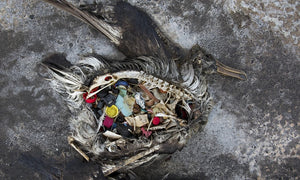 The Harms of Plastic