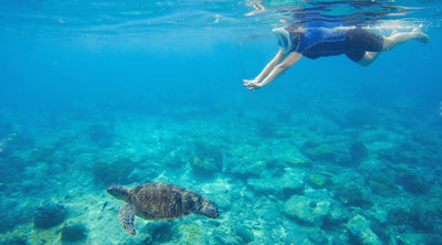 Top 7 Places to Snorkel with Sea Turtles