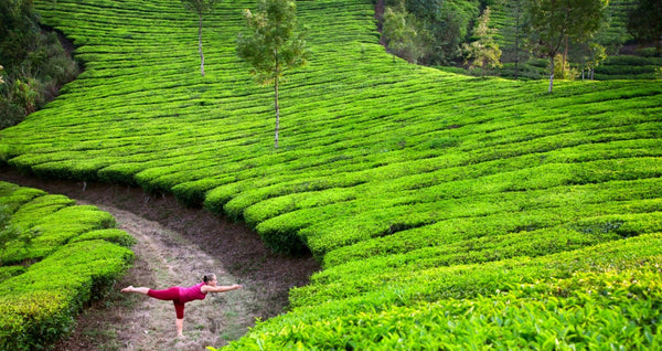 Top 5 Hill Stations To Head To In Kerala - Author's Choice