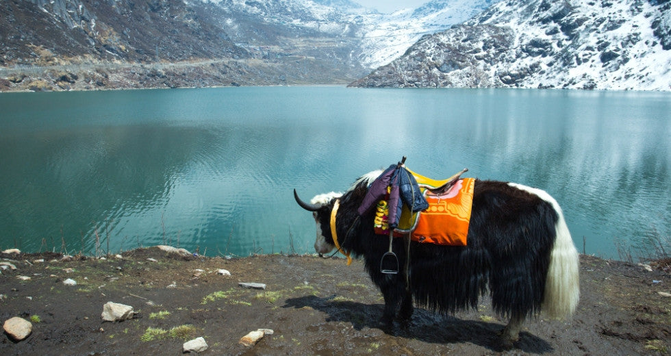 GoPo picks the top five most beautiful lakes in India on letsgopo.com