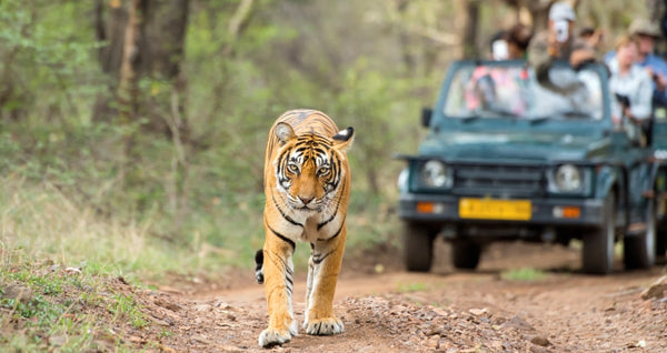 Should one pre-book a Safari in Corbett?