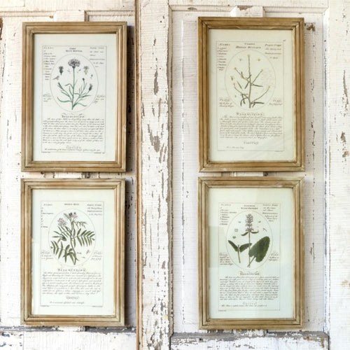 Notated Botanical Prints, Set of 4