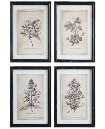 Vintage Style Black Framed Floral Images, Set of 4