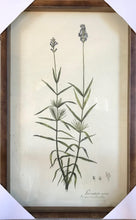 Collected Botanical Prints, Set of 6