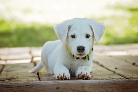 ditch the white lab coats pet a puppy