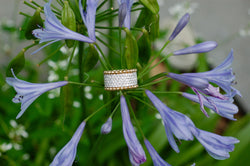 Diamond and Gold Band
