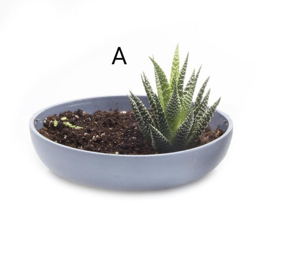 Pot - Moog Succulent Dish Medium