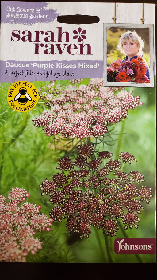 Daucus 'Purple Kisses Mixed' - Seed Packet - Sarah Raven