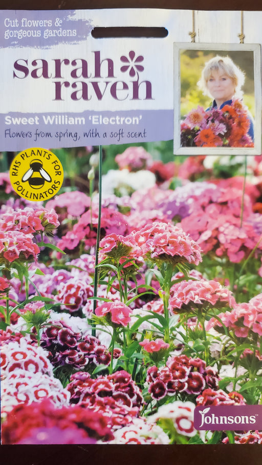 Sweet William 'Electron' - Seed Packet - Sarah Raven
