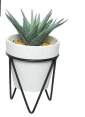 Succulent in pot with black metal stand