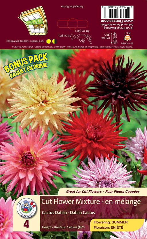 Dahlia - Cactus - Cut Flower Mixture