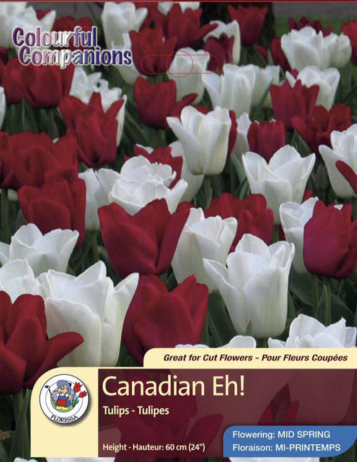 Campanion Canadian Eh! Tulips