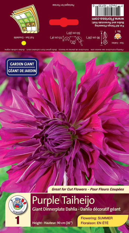 Dahlia - Dinnerplate - Purple Taiheijo