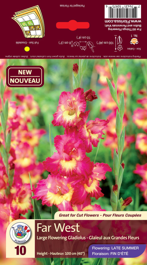 Gladiolus Far West