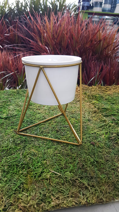 White Pot with Gold Stand 4""