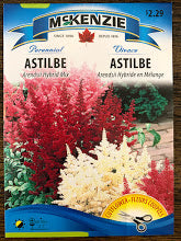Astilbe Arendsii Hybrid Mix - Seed packets