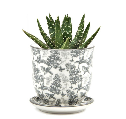 Pot & Saucer - Liberte 3 Grey Forest