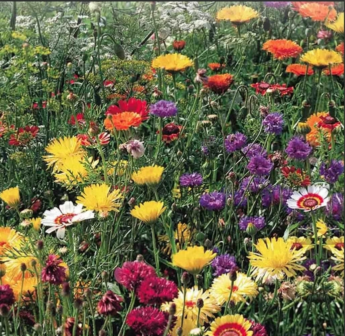 Seed packets - All Purpose Wildflower Mix Jumbo pack