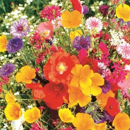 Flower Garden Old Fashioned - Seed Packet