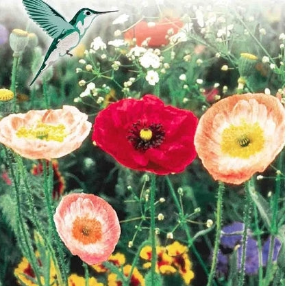 Hummingbird Garden Jumbo - Seed Packet