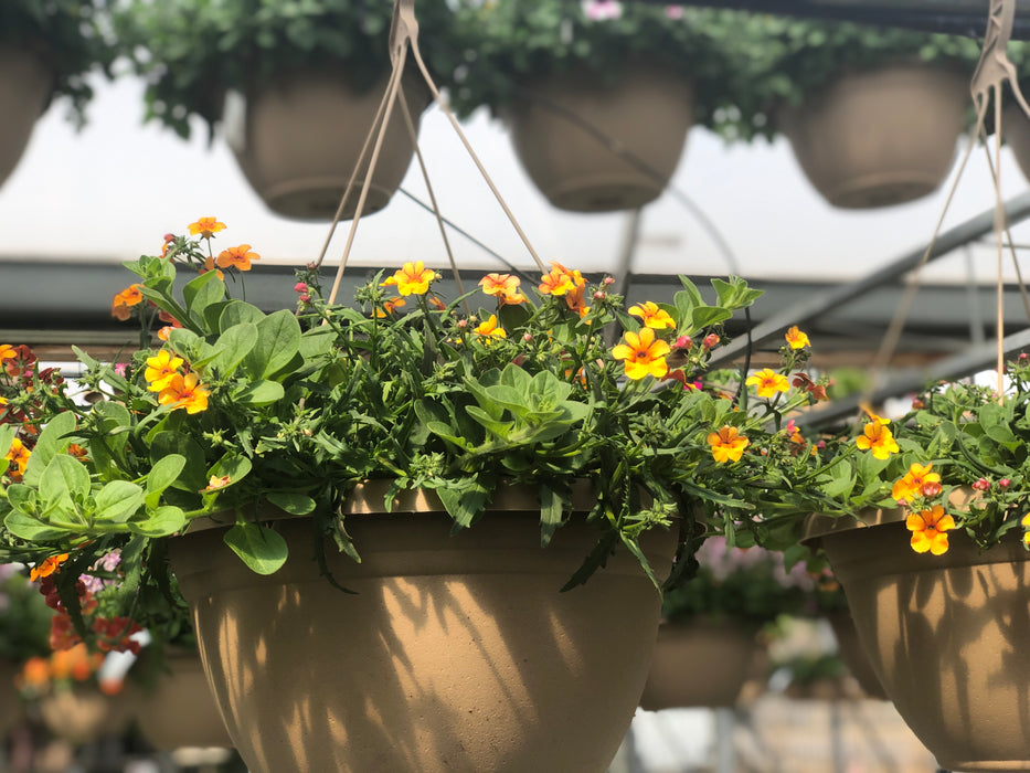 Annual Mixed Flower Hanging Baskets