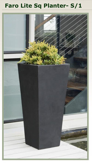 Plant - In Hanging Pot