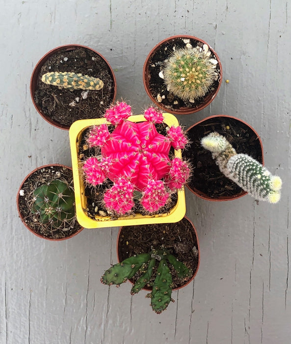Growers Choice Cacti Collection