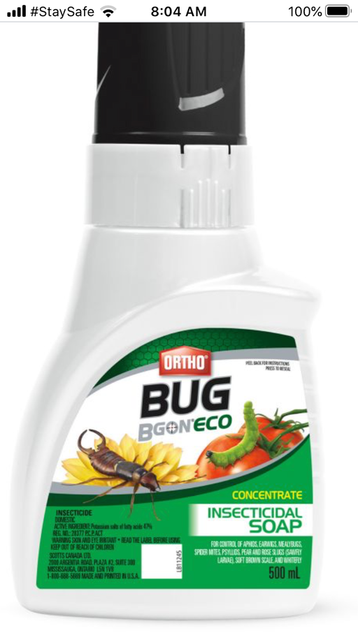 Bug B Gone Insecticidal Soap Concentrate 500ml