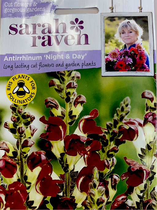 Antirrhinum'night of Day' (Snapdragon) - Seed Packet- Sarah Raven