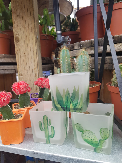Pot  square with hand painted Cacti