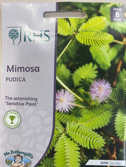mimosa 'pudica'' - Seed Packet- Sensitive Plant