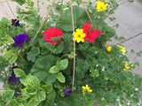 Annual Hanging Basket Carsons Colours