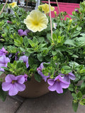 Annual Hanging Basket ' misty