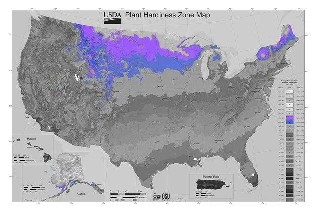 In the United States, zone 4 stretches from the Northwest into the Central Rockies and back up to the northern parts of the Midwest.  Last frost is usually Mid May and first frost comes by the 1st of October.