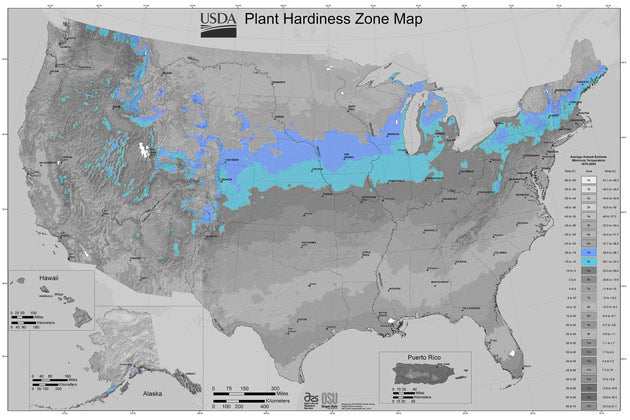 In the US, 32 states have areas in zone 5. The zone stretches from the North East right across the Midwest, butting up against the eastern side of the Rockies.  Last frost is usually around mid May and first frost comes midway through October.