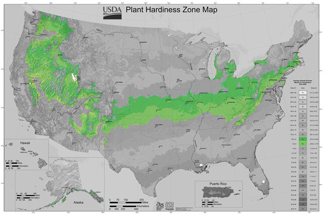 In the US, zone 6 starts on the east coast and goes right across the center of the country. It touches 38 states before it hits the Rockies and runs north, not quite making it to the west coast.  Last frost happens about the 1st of April and first frost comes around the middle to late October.