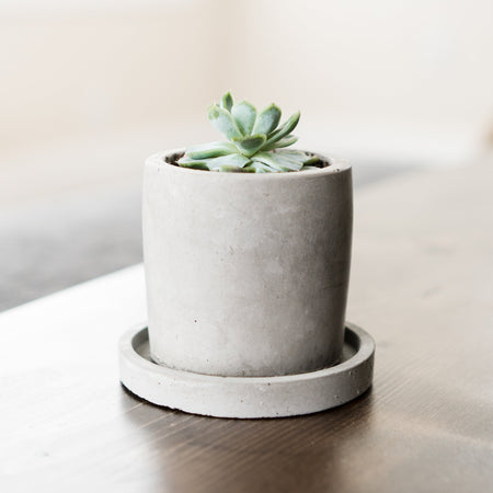 CONCRETE PLANTER DISH