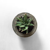 MINI SUCCULENT CONCRETE PLANTER