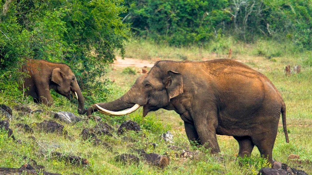 Threats to the Elephants