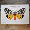 Cream Spot Tiger Moth Print