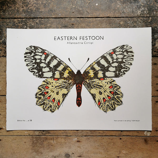 Eastern Festoon Butterfly Print