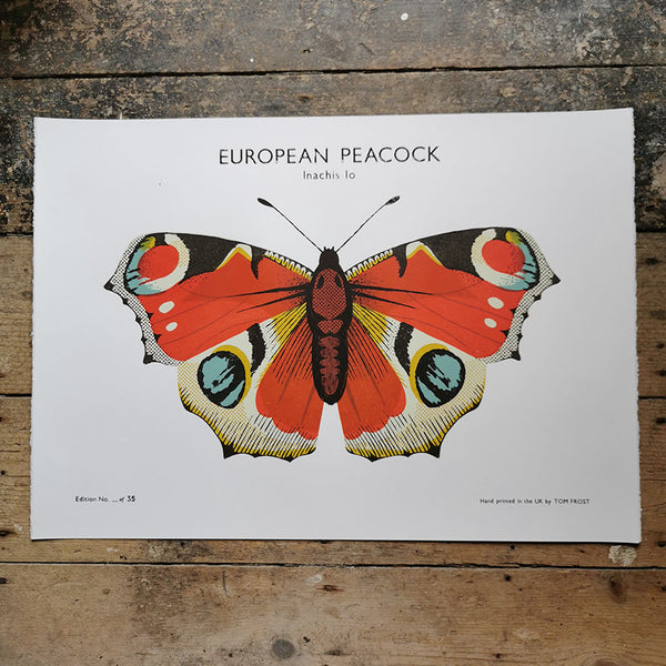 European Peacock Butterfly Print