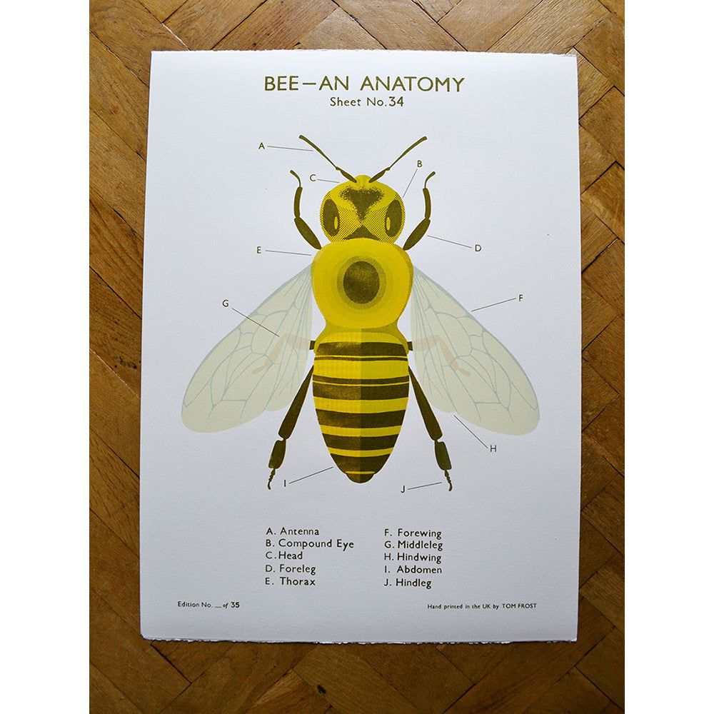 Bee Anatomy School Chart\' Screen Print by Tom Frost - Soma Gallery
