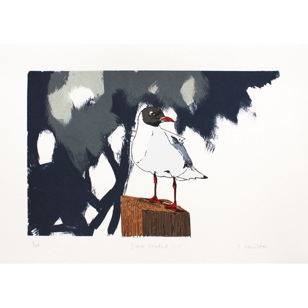 Black Headed Gull print by Fiona Hamilton