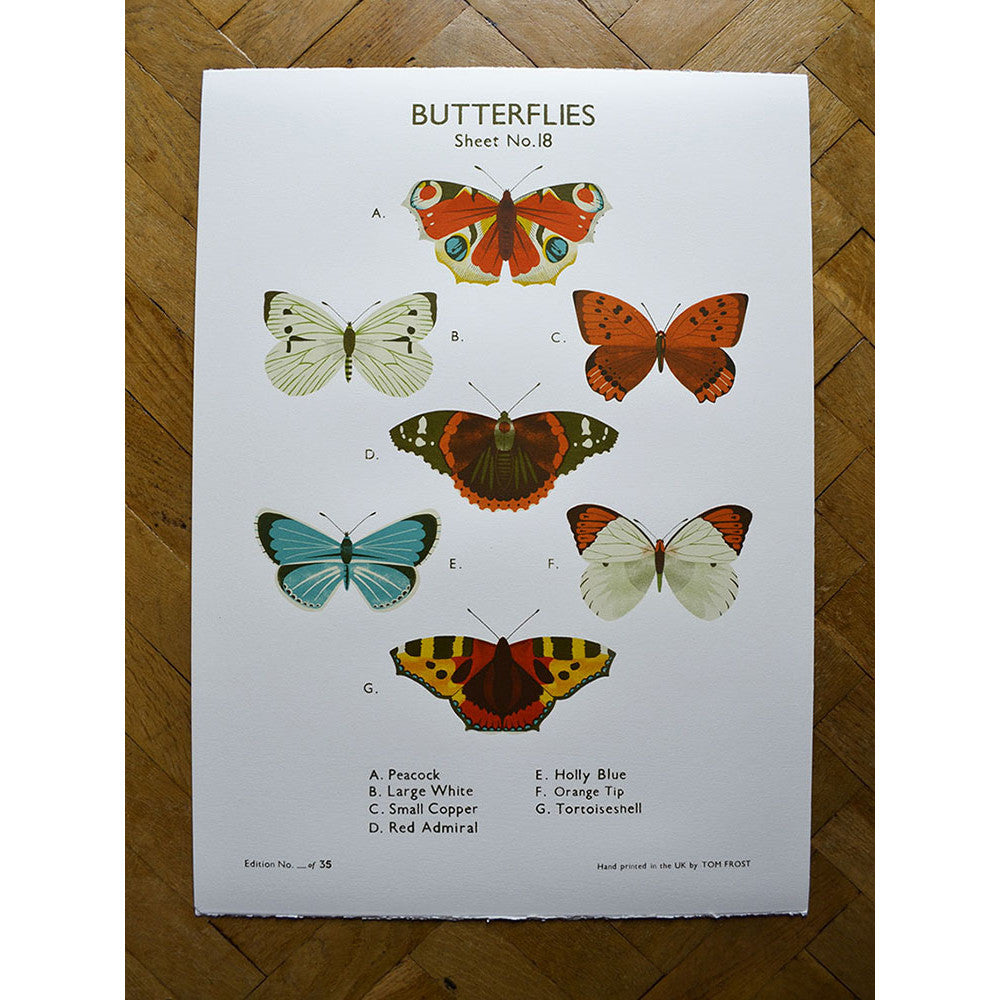 Butterflies print by Tom Frost