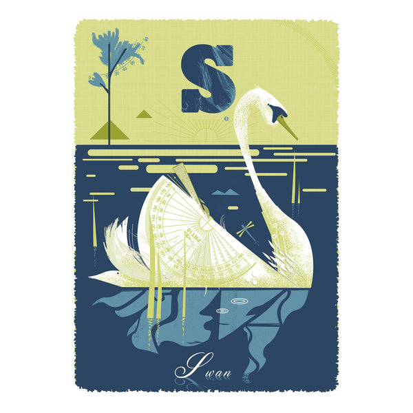 Swan print by Graham Carter