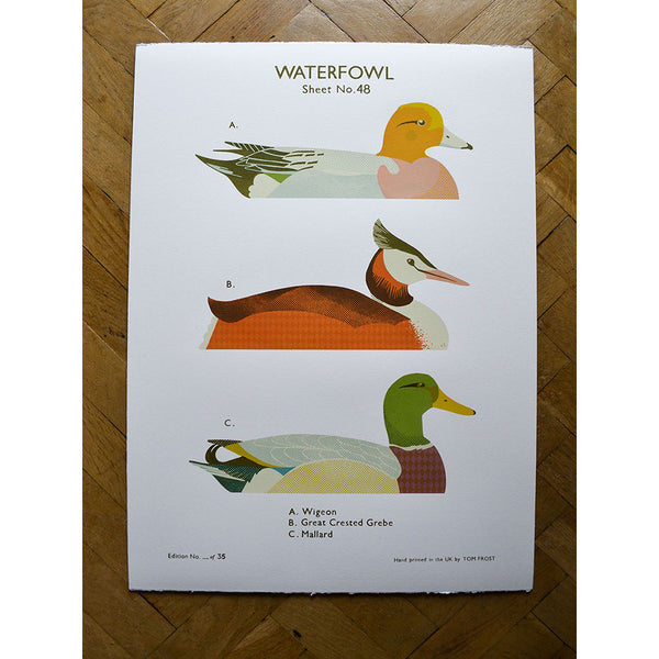 Waterfowl print by Tom Frost